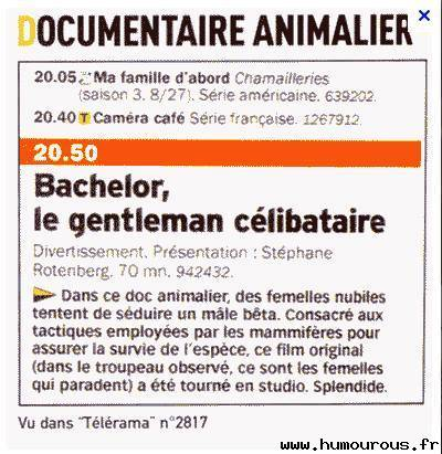 Bachelor le documentaire
