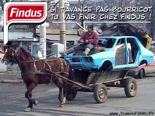 Findus au cheval
